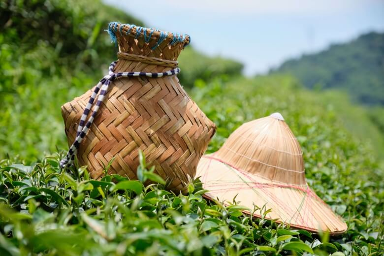 The equipment of tea grower.