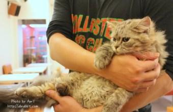 [台中]貓爸貓咪主題餐廳--超多貓咪,貓奴們不能錯過,每隻貓都好溫馴喔!@西區 精美街