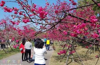 2018 02 18 225817 - 后里崴立機電│工廠內也有百棵櫻花樹的櫻花公園!紅白粉三種色系櫻花一次滿足~