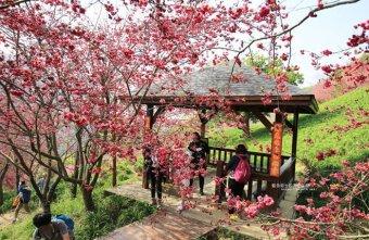 2018 02 24 134926 - 沐心泉休閒農場-來沐心泉被滿滿的盛開櫻花包圍吧