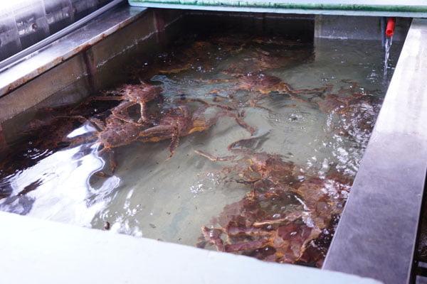 2019 10 15 010301 - 裕泰海產台中海鮮批發商,就在環中路鐵皮屋內,各類海鮮樣式俱全