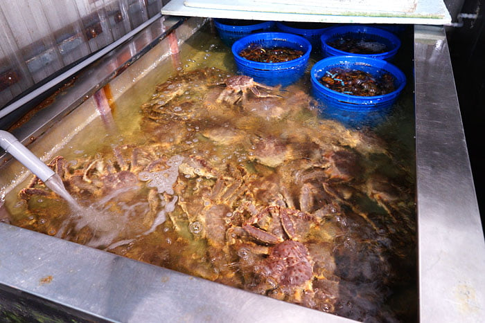 2020 09 21 013520 - 熱血採訪│台中海產批發超商,超大凍庫有夠冷,現場活海鮮也不少,期間限定泰國蝦一斤250