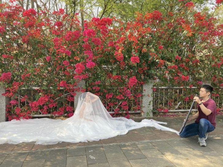 2021 03 10 235928 - 台中東大公園九重葛盛開中,宛若瀑布炸出圍籬,一片片桃紅色花牆好好拍~