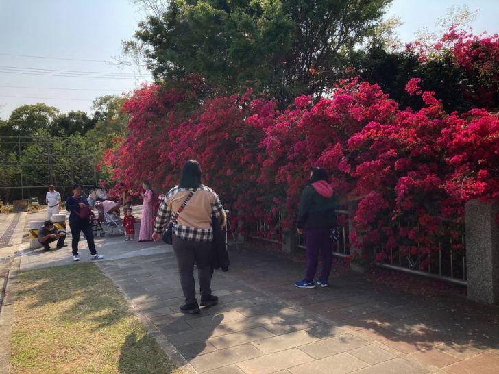 2021 03 11 000017 - 台中東大公園九重葛盛開中,宛若瀑布炸出圍籬,一片片桃紅色花牆好好拍~