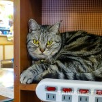 Kitten-Coffee-Garden-Pet-Cafe-Taipei-Dog-Cafe-33