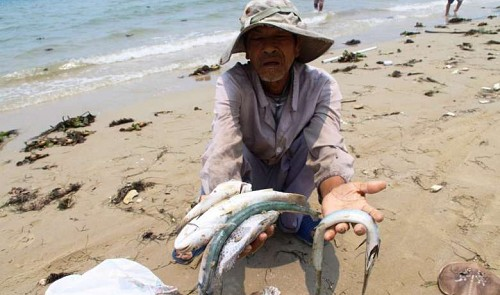 A Vietnamese villager shows dead fish washed up on the beach