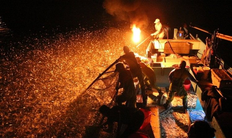 scoop nets and fire are used to catch sardines in nothern Taiwan