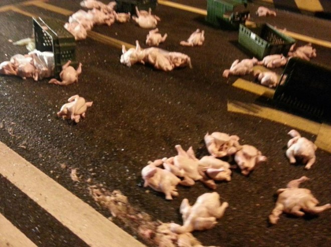 chicken carcasses on a road in Tainan, Taiwan
