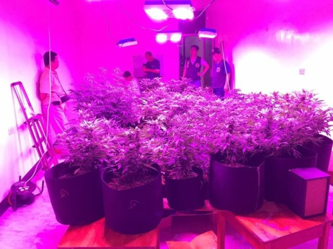 plants under grow lights