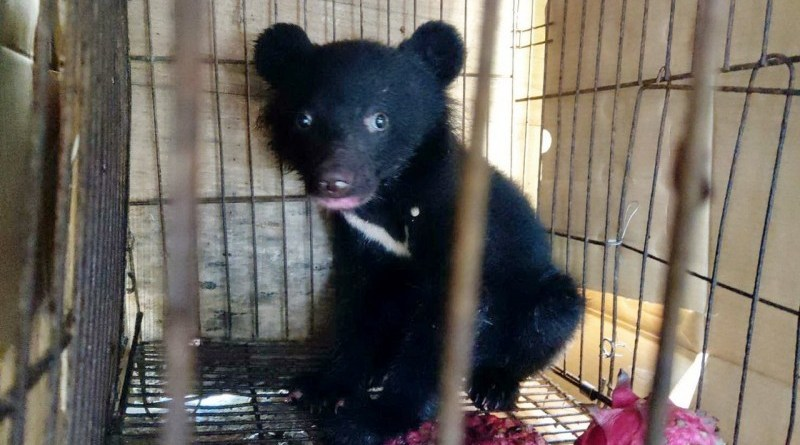 Formosan black bear rescued in Taitung County