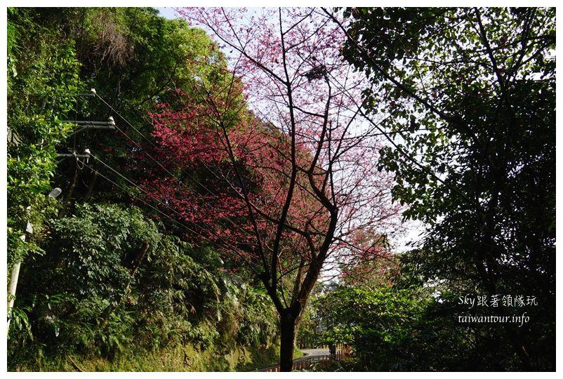 台北景點推薦大同山櫻花林03801