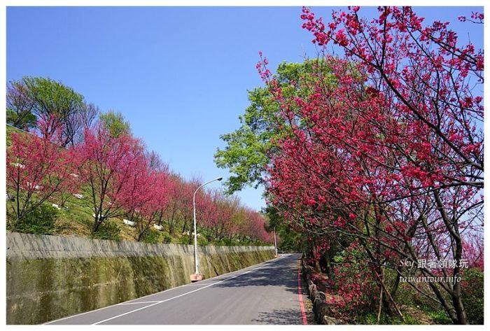 台北景點推薦龜山壽山巖觀音廟櫻花03649
