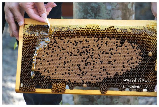 宜蘭景點養蜂人家02452