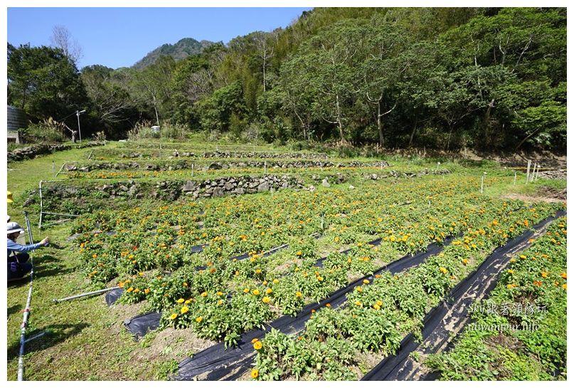 新竹景點推薦尖石鄉那羅部落香草青蛙石02201
