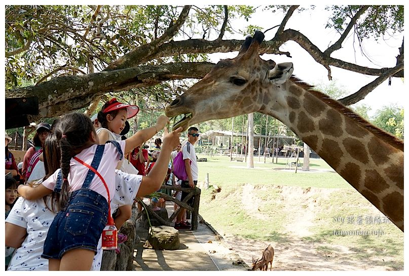 泰國親子旅遊綠山動物園kheow kheow00123