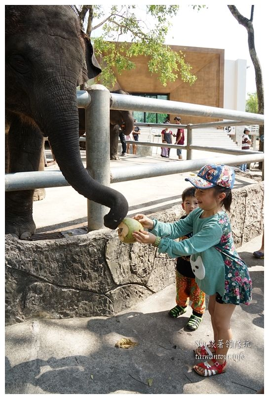 泰國親子旅遊綠山動物園kheow kheow00184