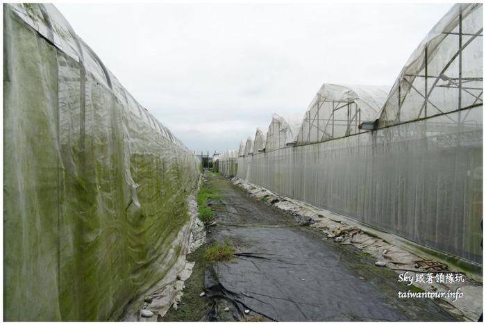 花蓮農業之旅DSC00885
