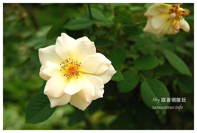 蘿莎玫瑰莊園01234