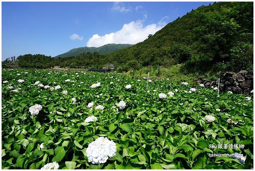 陽明山竹子湖繡球花大賞園DSC02750