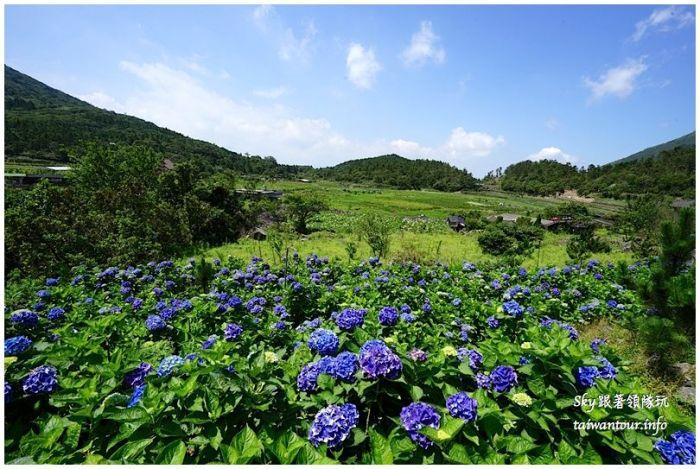 陽明山竹子湖繡球花大賞園DSC02798