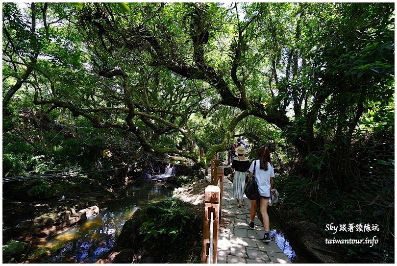 陽明山竹子湖繡球花DSC02864