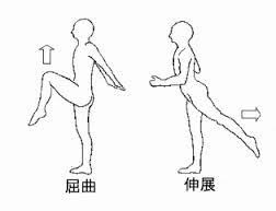 股関節の屈曲&伸展