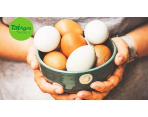 Taj hen whole egg powder Products, Latest Taj hen whole egg powder News, Taj hen whole egg powder Sector Pictures, Agricultural and Processed Food Products Export Development Authority Videos, and Special Reports Taj Agro APEDA