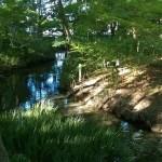 朝の森のマインドフル・ウォーキングの3つの効用