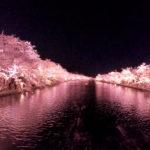 弘前桜をGoPro撮影。弘前さくらまつりに行って来ました!