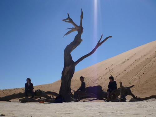 ナミビアナミブ砂漠2 (26)