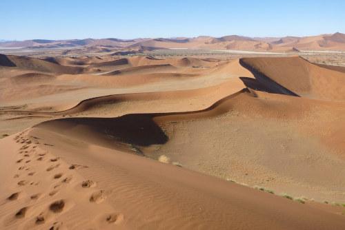ナミビアナミブ砂漠2 (18)
