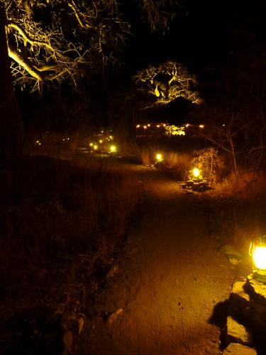 夜のプラネットバオバブ (12)