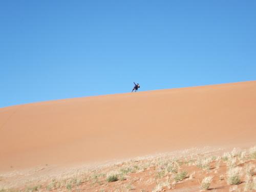 ナミビアナミブ砂漠1 (6)