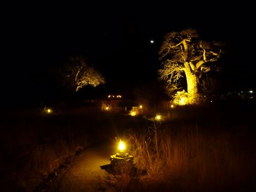 夜のプラネットバオバブ (7)