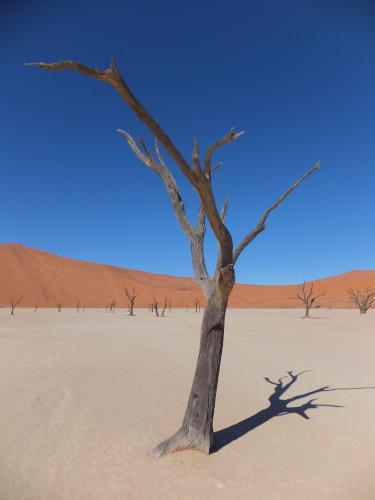 ナミビアナミブ砂漠1 (11)