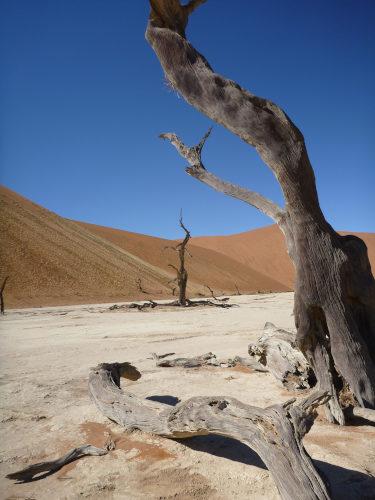 ナミビアナミブ砂漠2 (25)
