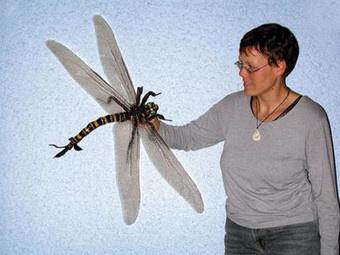 史上最大の昆虫はカモメほどの大きさであるメガネウラという巨大トンボ!日本語ではゴキブリトンボ!!