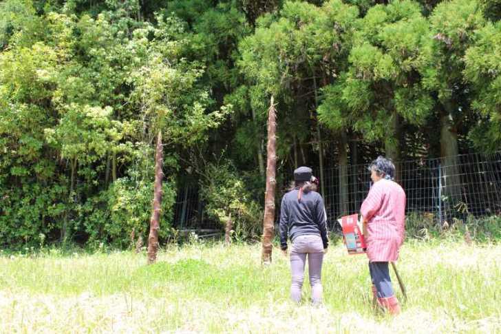 裏庭での「たけのこ掘り」が衝撃的だった件について (2)