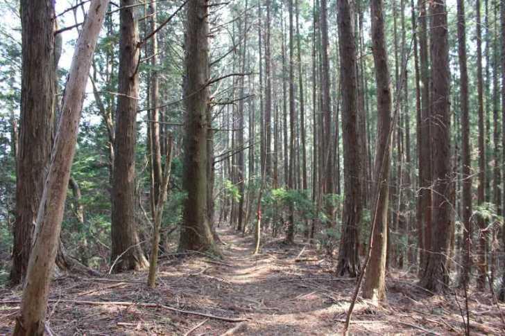 奥三河名山八選:愛知県新城市の竜頭山(りゅうずさん)に登ってきた! (18)