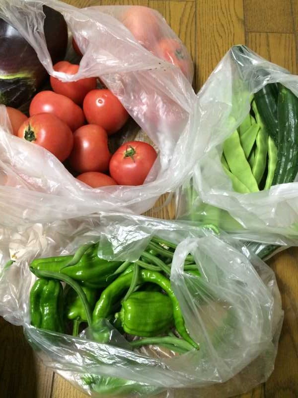 採れたて野菜のてんぷらと自給自足の裏ワザについて (1)