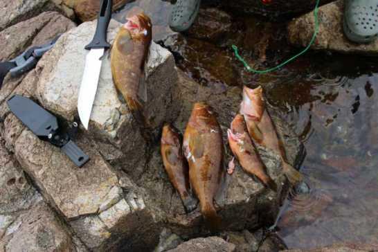 魚突きで獲ったキジハタは炭火で塩焼きに!BBQおいしすぎてまんせー!! (1)