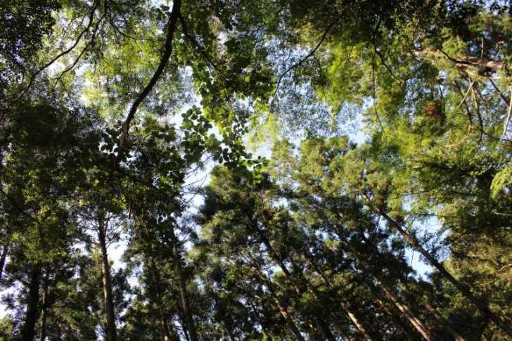 愛知県唯一の日本の滝100選である新城市「阿寺の七滝」に情緒あり (5)