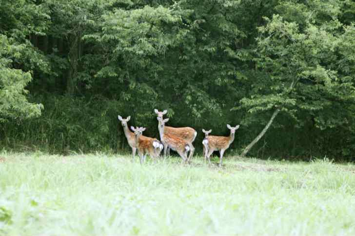 ハンター試験に無事合格!罠猟の狩猟免許をゲットしたので、2014年から鹿や猪を獲ります!! (1)