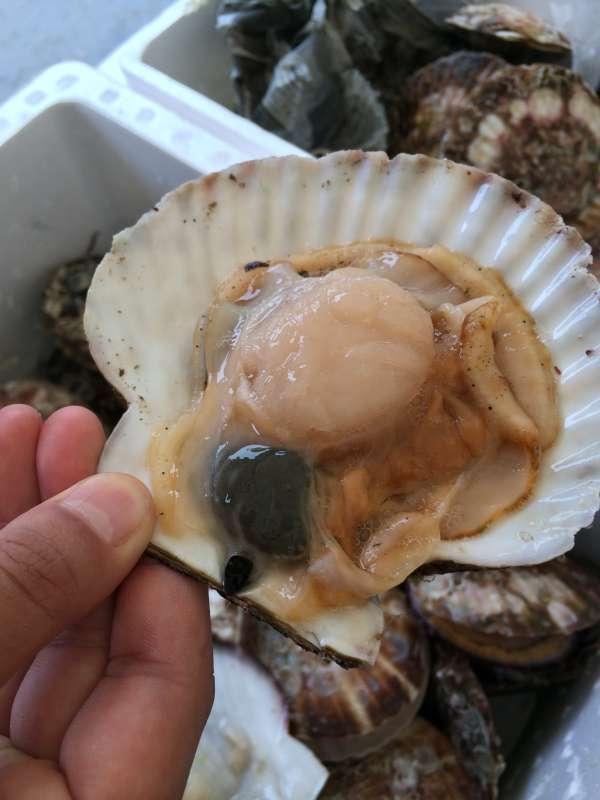 つくで祭り2014に行ってきた!まさか南三陸の生きたホタテが食せるとは!【愛知県新城市】 (1)
