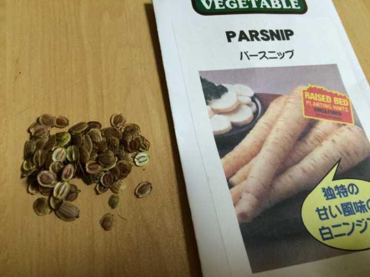 【珍しい野菜栽培】5.珍しい野菜のタネを植えたらネズミに喰われたよ (7)