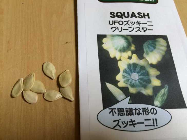 【珍しい野菜栽培】5.珍しい野菜のタネを植えたらネズミに喰われたよ (5)
