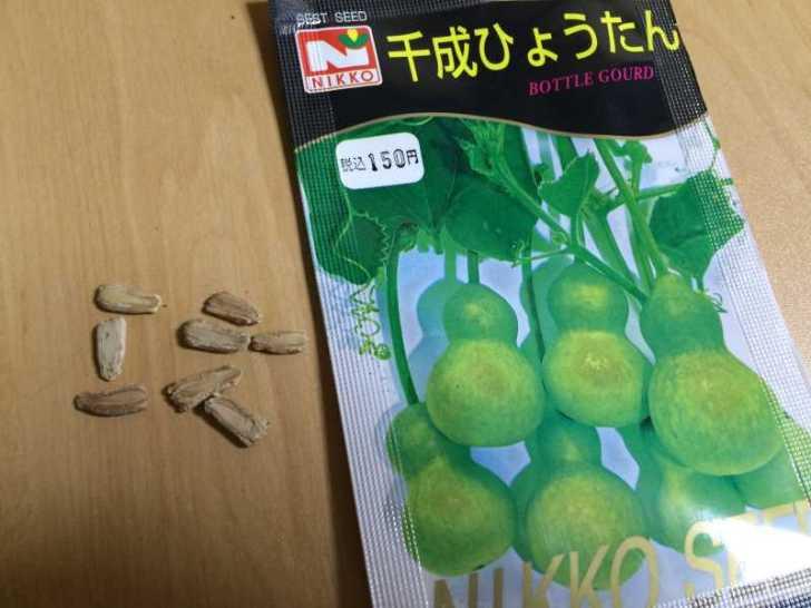 【珍しい野菜栽培】5.珍しい野菜のタネを植えたらネズミに喰われたよ (10)