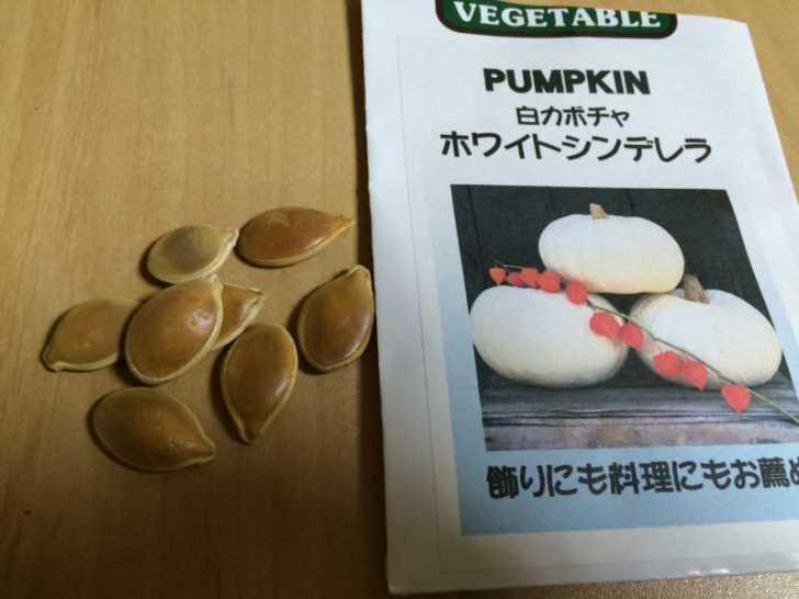 【珍しい野菜栽培】5.珍しい野菜のタネを植えたらネズミに喰われたよ (2)