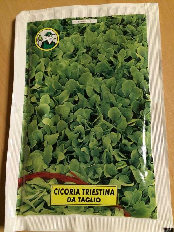 【珍しい野菜栽培】3.イタリア野菜の種が送ってもらえたので、赤チコリータルディーボなども育てます! (5)
