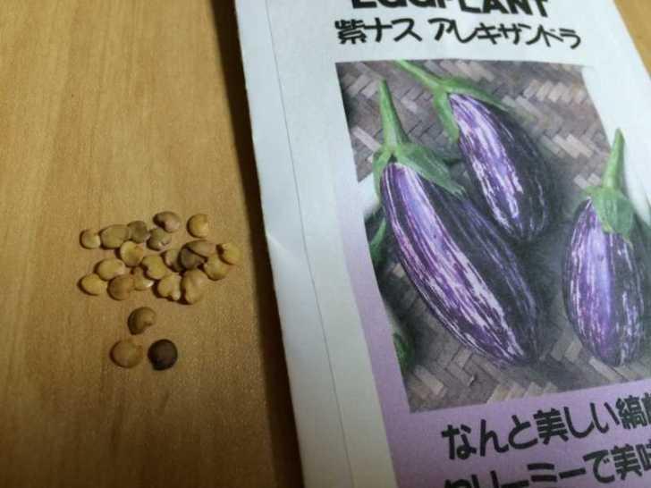 【珍しい野菜栽培】5.珍しい野菜のタネを植えたらネズミに喰われたよ (9)